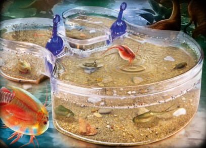 Velké pravěké akvárium