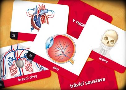 Lidské tělo - karetní hra z řady Mysli a spojuj od Albi